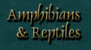 Kim Shaklee Amphibians & Reptiles Page